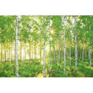 8 519 birch tree woods mural discount wallcovering for Birch tree mural