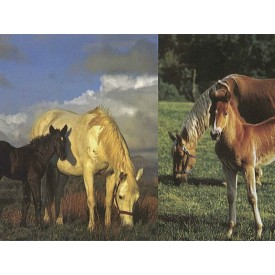Horse Scenes Border